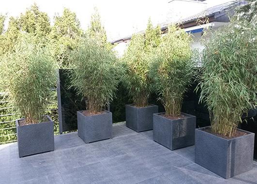 Bambus garten  Projekt 4: Moderner BambusGarten / Gartenwelt Schlotterbeck